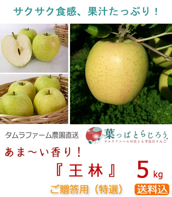 「王林」りんご/ご贈答用 5kg(タムラファーム農園直送)【送料込】