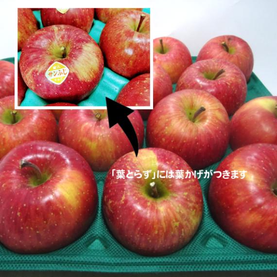 岩手の正直者りんご 品種:ご家庭用 葉とらずサンふじ 5キロ