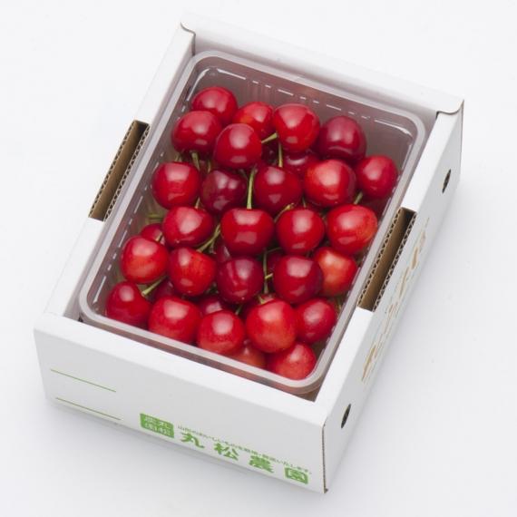 さくらんぼ 大将錦 500g(500g×1) バラ詰 L〜2L玉 秀品 [0143] 【お中元2021】 【フルーツ】