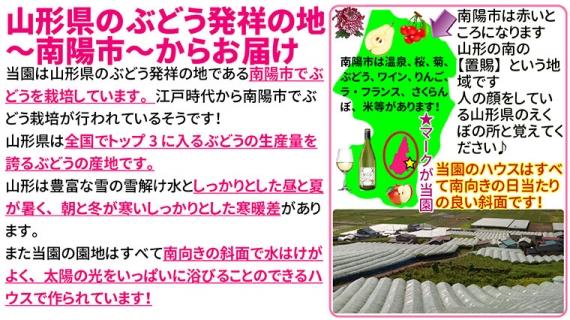 高級ぶどう厳選3房詰合 品種おまかせ9月お届け発送予約 【送料無料】