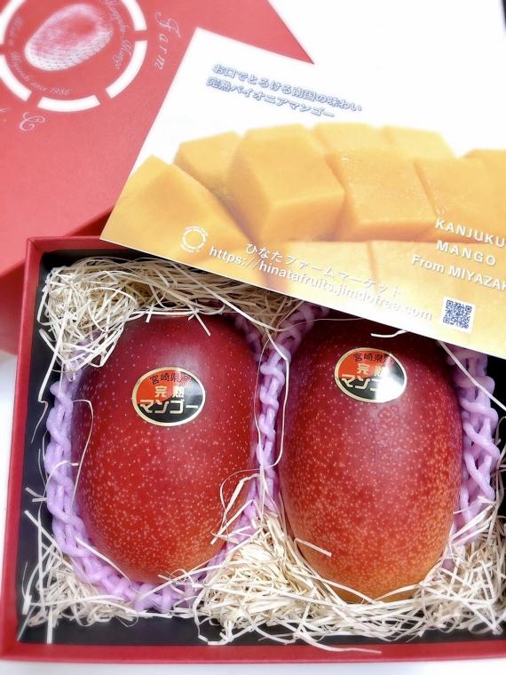 【完熟マンゴー】宮崎パイオニアマンゴー2L×2【 お中元 2020 】【 フルーツ 】