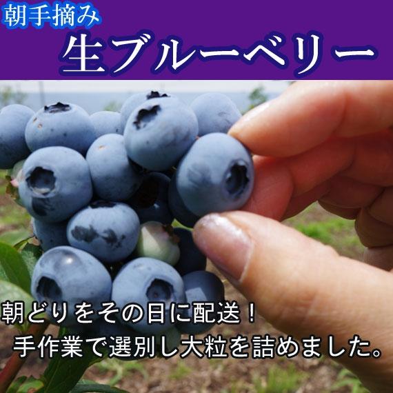 日照時間 日本第1位 明野の生ブルーベリー 朝どり産地直送 2kg 送料無料