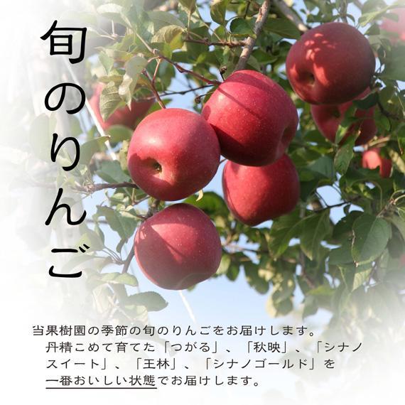 旬のりんご【家庭用・5kg】