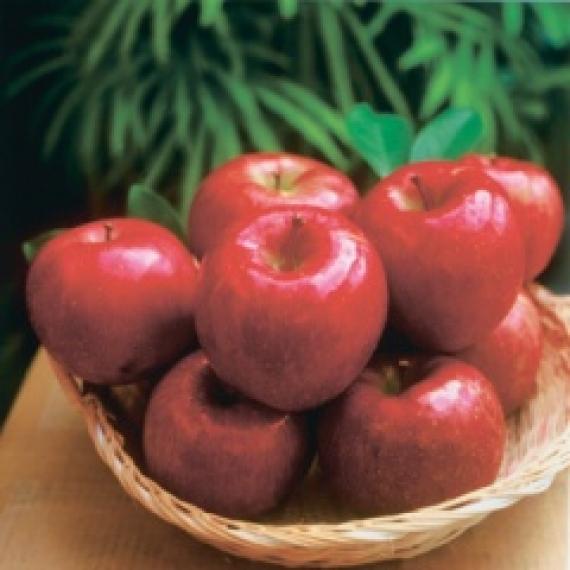 【贈答用:予約販売】期間限定!信州りんご 特選完熟サンふじ10kg