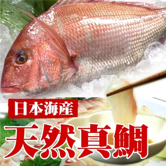 【日本海産】天然真鯛(1尾 1kg)