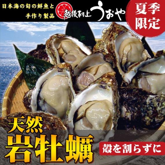 【日本海産】天然岩牡蠣(殻を割らずにお届け)