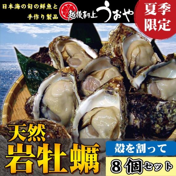 【日本海産】天然岩牡蠣(割ってお届け)8個セット