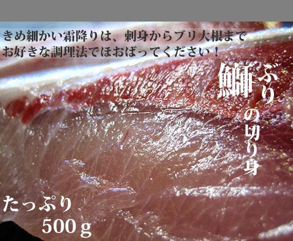 *一時非表示*【2015年11月中旬−販売予定】【人気産地品】富山湾近海産・天然ぶりのたっぷり切り身:5切れ・約500g ---------------- 手間いらずクイック料理ができる品