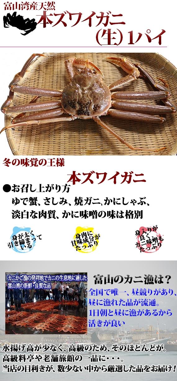 《*即日販売/発送*》本ズワイガニ <富山湾産>(天然・生・未冷凍)1杯 サイズ目安:1.2kg前後・・・3/20漁終了。禁漁前最後の高級がにの食べ納め