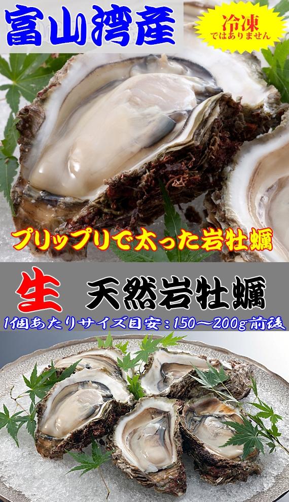 岩牡蠣<天然・生>【富山湾産】|150〜200g前後×5個[送料無料]