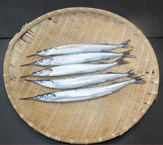 さより|サヨリ 姿<天然・生>【富山湾近海産】・・・・・「花見魚」との別称がある程、春が旬!「魚界の麗人」「魚界の美人」とも言われ、スマートな身体に、ツンと突き出た下顎と