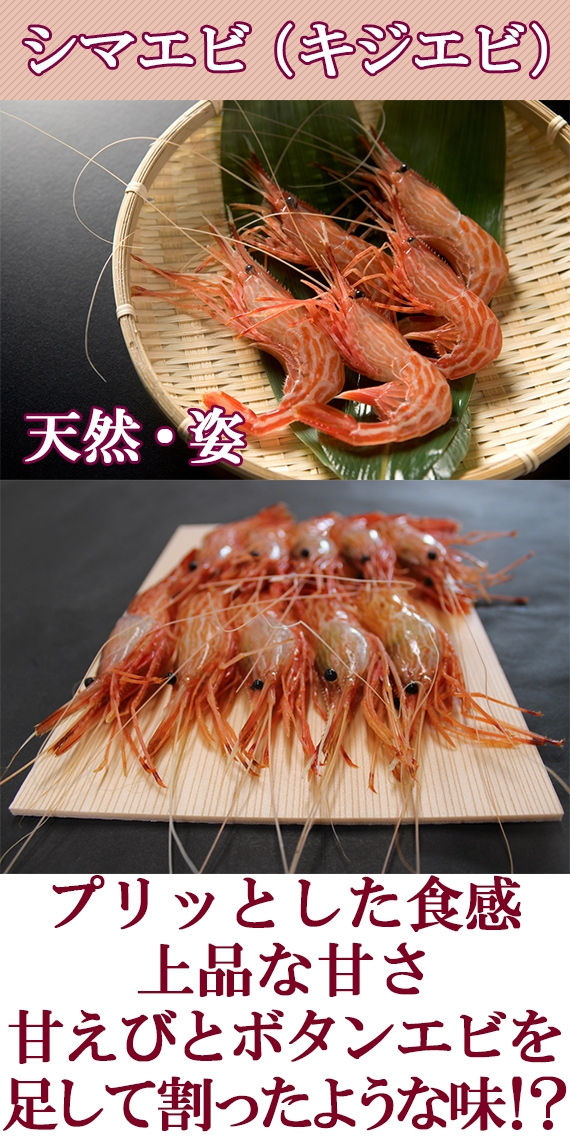 キジエビ(シマエビ) 天然・姿・5尾<富山湾産>・・プリッとした食感と上品な甘さが人気の高級なえび。お刺身は勿論、焼いても・煮ても、エビチリ・フライ・天ぷらなどの調理品もOK