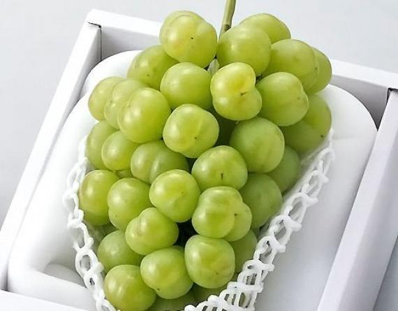 岡山特産「瀬戸ジャイアンツ」1房・900g【赤秀】薄皮で皮ごと食べれて、しかも種無し!