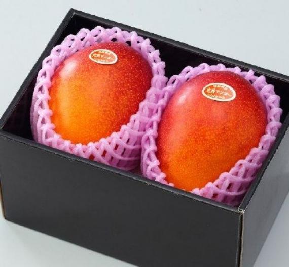 ★「情熱みやざきブランド!」完熟マンゴー(2個入り) B品 2L(350g以上×2個)旨い!一度食べたら忘れられない味です!