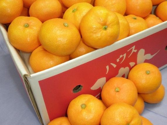 【お中元2020】【フルーツ】みかん 「徳島産アグリあなん」温室栽培ハウスミカン48個〜60個(5kg) ★送料無料!発送は、6月中旬から。