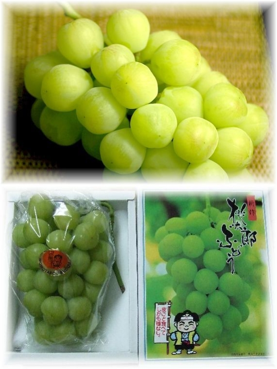 【お中元2020】【フルーツ】発送は7月中旬から。「岡山特産」桃太郎ぶどう!(1房)とニューピオーネ(1房)詰合せ温室栽培。ふるさと特産品