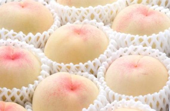 【お中元2020】【フルーツ】発送は7月上旬から。岡山白桃「水蜜桃・白鳳種」5個〜6個(1.4�s)白く美しい果肉は、とろけるような果肉の桃です。
