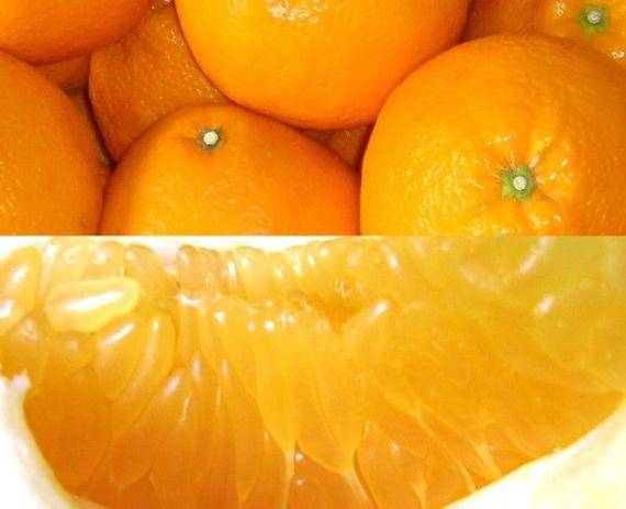 みかん 「 愛媛県産」伊予柑(いよかん)赤秀 Lサイズ 10kg 「糖が高いのに、さっぱりとした食感、さわやかな味の柑橘です。」