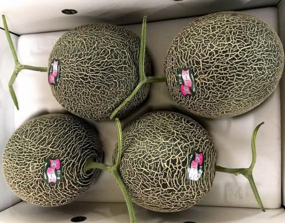 発送は5月下旬から。 肥後グリーンメロン「甘さ抜群!糖度16度以上!」 4 L 優品1箱(4個入り)8kg果肉は柔らかくシャキシャキとした食感と甘さが特徴のメロンです。