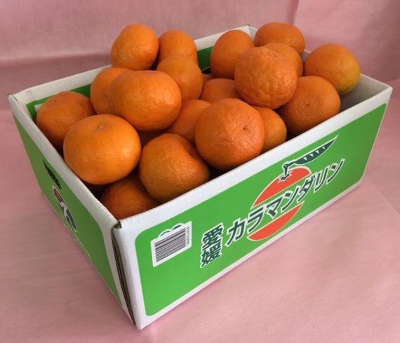みかん 「カラマンダリン」 JA全農えひめ中央 「赤秀」  Mサイズ(5Kg)オレンジ風の温州春みかん