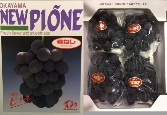「岡山特産」ニューピオーネ [優品] 3房〜5房(2kg)発送は6月中旬から。【2021お中元】