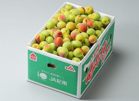 紀州 南高梅 和歌山県産  秀品【 4Lサイズ 】約10kg 高級 梅 青梅 生梅など様々な用途に合わせてお使いいただけます。 発送は5/25日〜6/30日の予定