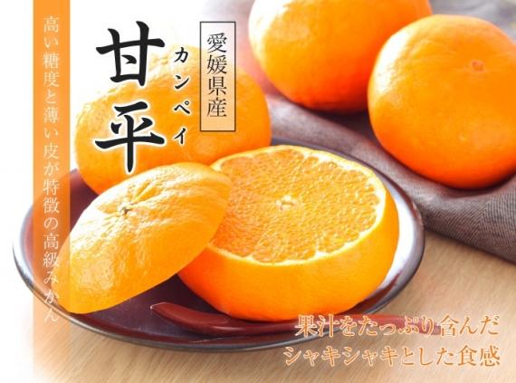 ◆送料無料◆愛媛県オリジナル柑橘「甘平(かんぺい)」 赤秀 5�s/3L〜4Lサイズ サイズ指定不可