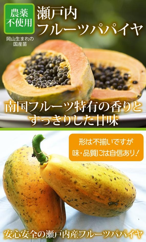 【送料込み】瀬戸内フルーツパパイヤ2個