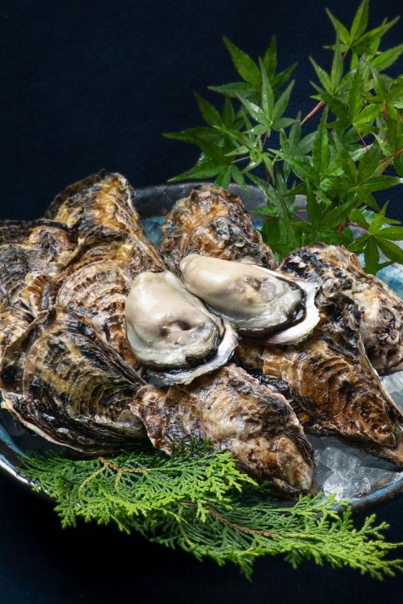 【送料無料】冷凍殻付き牡蠣「喜多嬉かき」別撰ひながき(3kg)