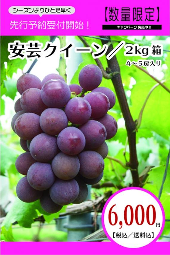 【早得・割安】大和の葡萄(安芸クイーン)[贈答品/2kg]