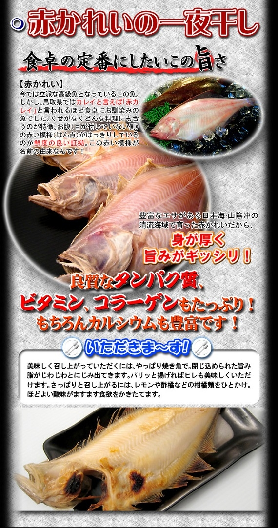 訳あり赤カレイ干物【鳥取県・兵庫県産】1kg 送料無料 冷凍便