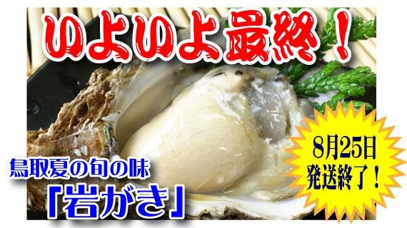 【予約販売】鳥取賀露港 天然岩がき「夏輝」 4~6個セット(貝柱の上側を切ってお届け)
