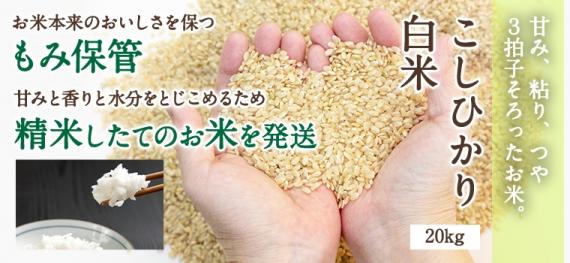 ★特別栽培米★ 鳥取県産 こしひかり白米 20kg【甘み・ツヤ・粘り 3拍子そろったお米】