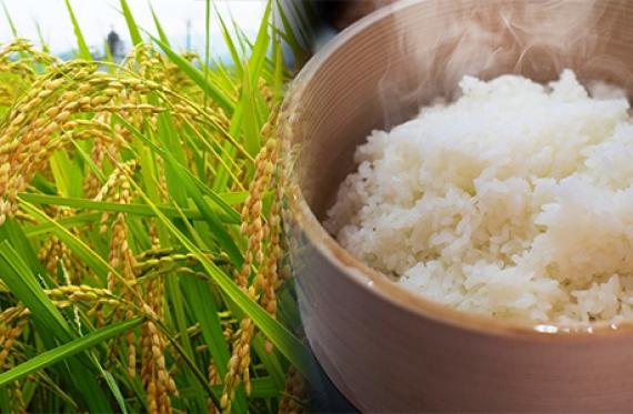 【ギフトセット】★特別栽培米★ こしひかり白米(真空パック 450g×3)
