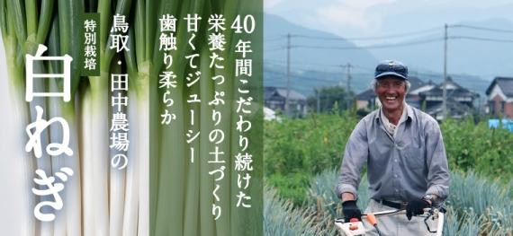 【送料無料!】田中農場の白ねぎ3kg(約18本〜30本)【 40年間のこだわり土づくりによる甘くてジューシーな白ねぎ】