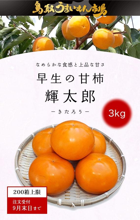 糖度が高い大玉の品種 輝太郎柿1箱3kg赤秀 鳥取県産 鳥取西部農業協同組合【鳥取うまいもん市場2021】