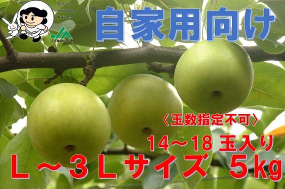 【鳥取特産】二十世紀梨 自家用5kg L〜3L【送料無料】