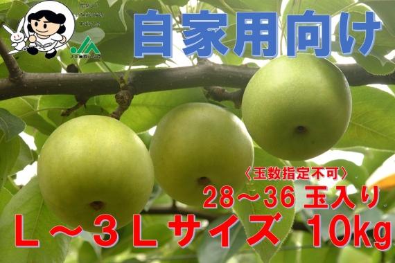 【鳥取特産】二十世紀梨 自家用10kg L〜3L【送料無料】