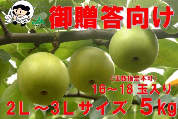 【鳥取特産】二十世紀梨 贈答用5kg 2L〜3L【送料無料】