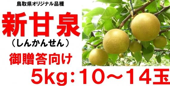 【鳥取特産】新甘泉 贈答用5kg 10〜14玉【送料無料】