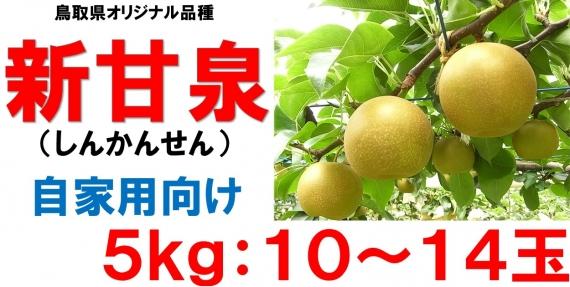 【鳥取特産】新甘泉 自家用5kg 10〜14玉【送料無料】
