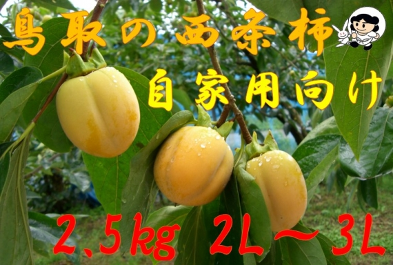 【鳥取特産】西条柿 2.5kg 2L〜3L【自家用】【送料無料】