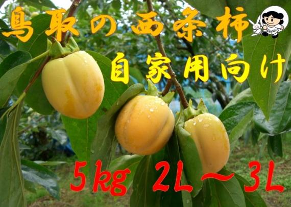 【鳥取特産】西条柿 5kg 2L〜3L【自家用】【送料無料】