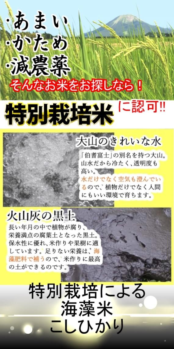 【特別栽培による海藻米コシヒカリ5kg】2年産 【送料込み】