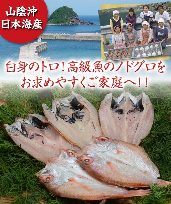 『白身のトロ』高級魚ノドグロ!【日本海の恵みを山陰から】【送料無料】新鮮・豪華!のどぐろ・ひもの 5尾セット