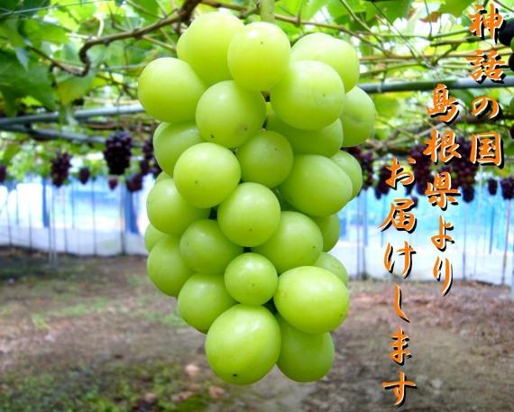【ご家庭用】 島根県産シャインマスカット家庭用2Kg(3〜5房)