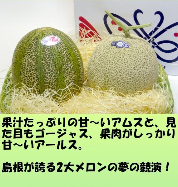 島根県産アムス・アールスメロンセット 【お中元】
