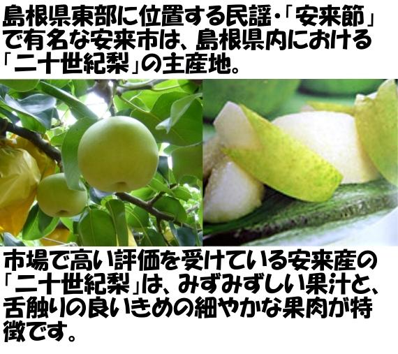 安来産二十世紀梨  優10Kg 4Lまたは3L(24、28玉) 【ご家庭用】