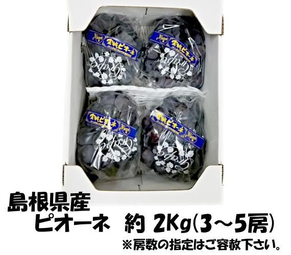 島根県産 ピオーネ 2Kg箱 ( 3〜5房 )【贈答】【グルメ・フルーツ・ぶどう】