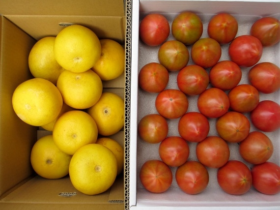 47CLUBオリジナル【送料無料】高知の旬・土佐文旦とフルーツトマトセット【期間限定】